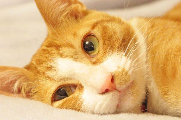 2月22日(猫の日)には猫×グルメ!猫をコンセプト&モチーフにしたお店をご紹介